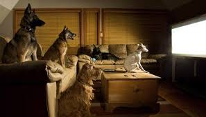 dogs watching television